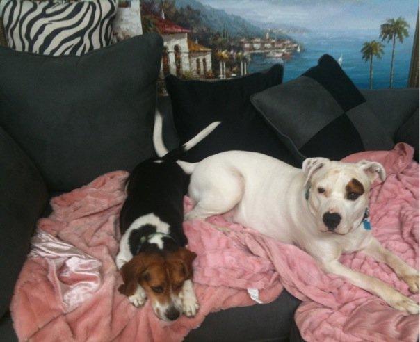 Callye's Dogs